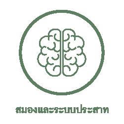 สมองและระบบประสาท